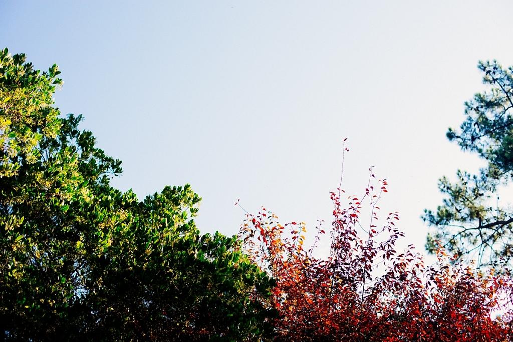 Balade d'automne à Lège-Cap Ferret