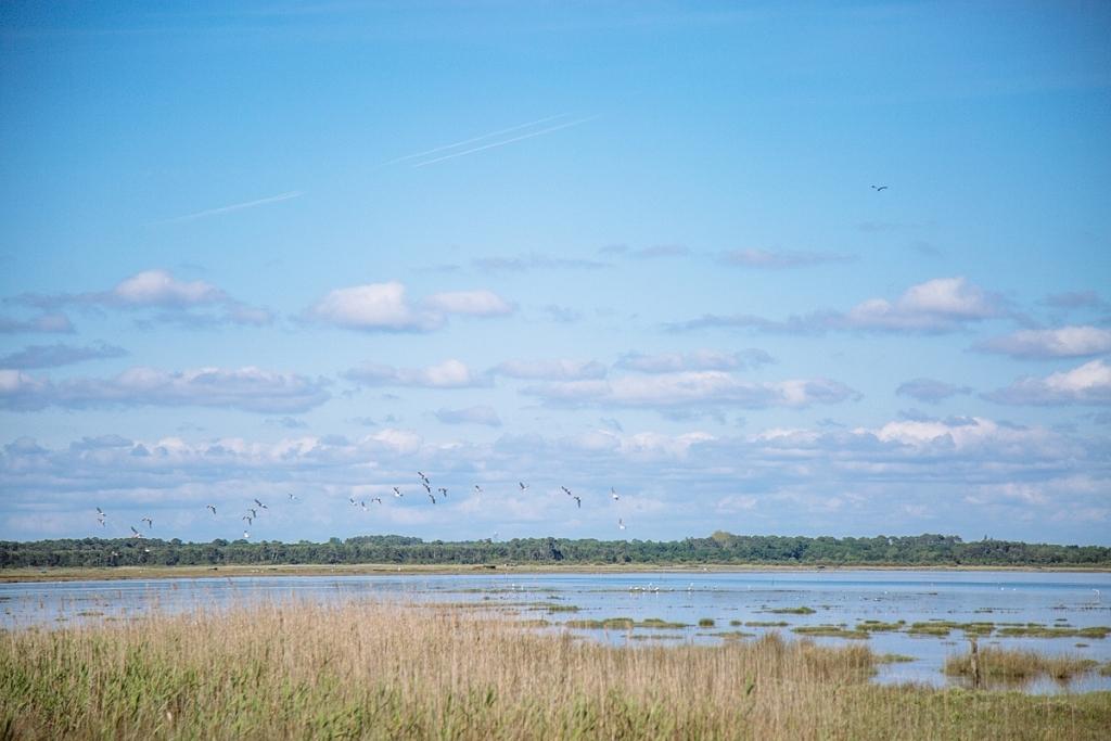 Claouey - Vol d'oiseaux