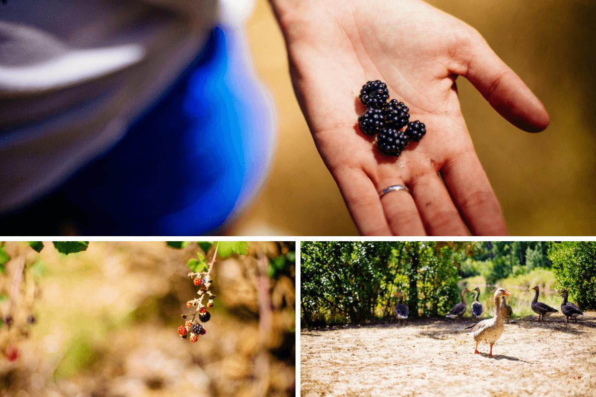 vacances-lege-cap-ferret-cueillette-fruits