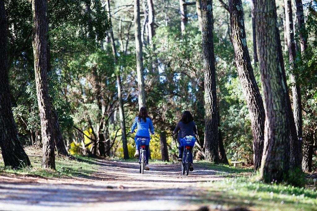 Vélo forêt cap ferret
